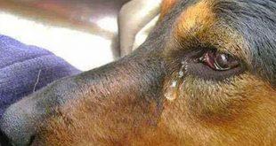 Conquista: Mulher expulsa marido de casa após flagrá-lo tendo relação sexual com cachorro