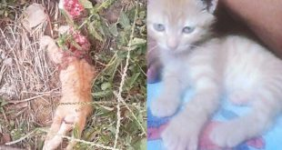 Crueldade: Gatinho é decapitado no Felipe Achy