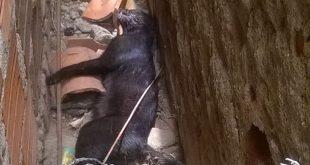 Crueldade: Segue a matança de gatos em Itambé