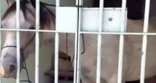 Vídeo: Capitão da PM prende cavalo após animal dar coice em carro na Paraíba