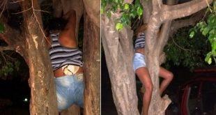 Mulher fica presa em árvore após tentar invadir casa do ex