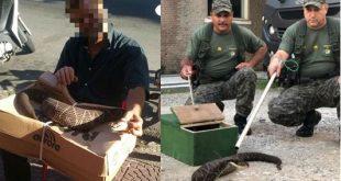 Ambulante brinca com cobra na rua, é picado e hospitalizado em estado grave em SP