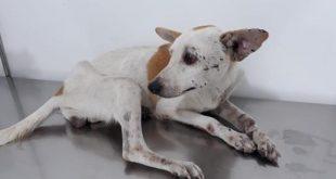 Crueldade: Cadela é estuprada, tem pernas quebradas e é jogada em vala em Jequié
